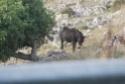 animali da lavoro Mulo_112