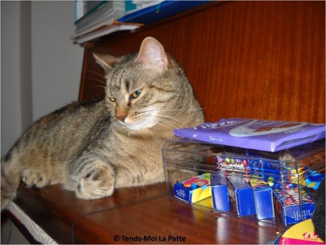 ZINA 4 ans gentille femelle marron tigrée Zina_310