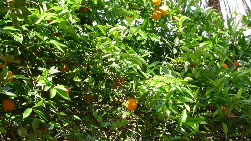 Oranger Orange10