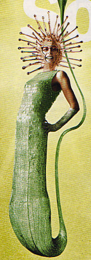 un nouvel hybride de jardinerie? 1_hybr10