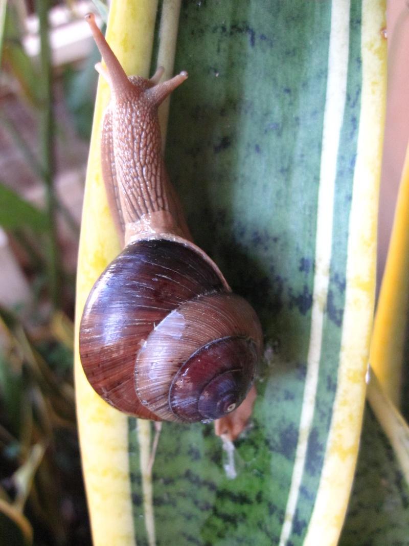 Escargots de Bali Img_9110