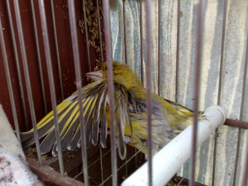 FOTOS FINAL PROV. VILLANUEVA DEL RIO Y MINAS 09052012
