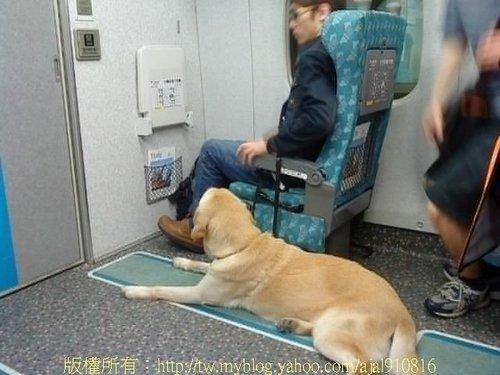 導盲犬-2010.5.3 1-111