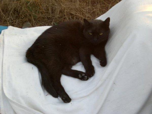 Gato negro PERDIDO! EN BLANES (Griona) Cuki310