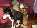Bergson x husky mâle de 9 ans  ADOPTE - Page 4 26126_10