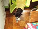 Bergson x husky mâle de 9 ans  ADOPTE - Page 4 26126_11