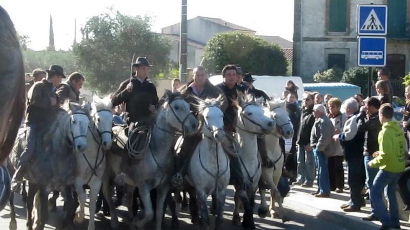 11.11.2010...Gallargues   le Mtx Mvi_3110
