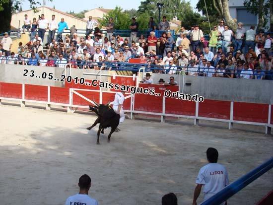 FERIA DE CAISSARGUE 2010 Dsc03417