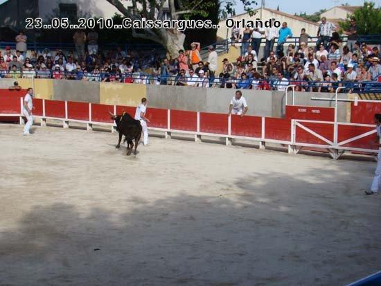 FERIA DE CAISSARGUE 2010 Dsc03418