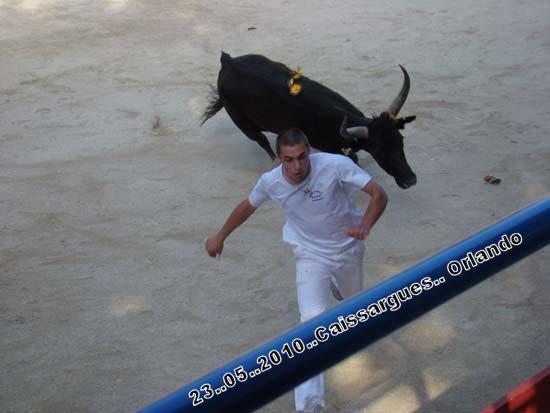 FERIA DE CAISSARGUE 2010 Dsc03419