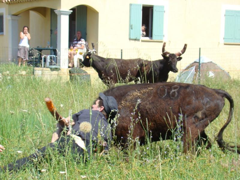 04.06.2010 bandide Junas manade l'estelle Dsc03810