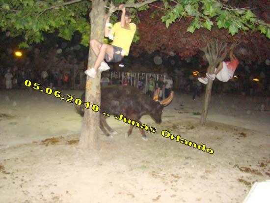04.06.2010 bandide Junas manade l'estelle Dsc03910