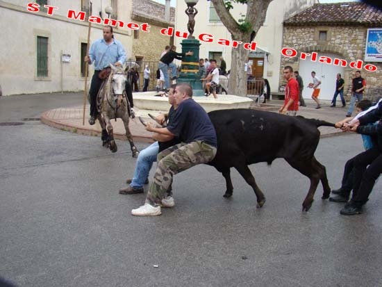 St Mamet du Gard Manade Leron 18h Dsc04114