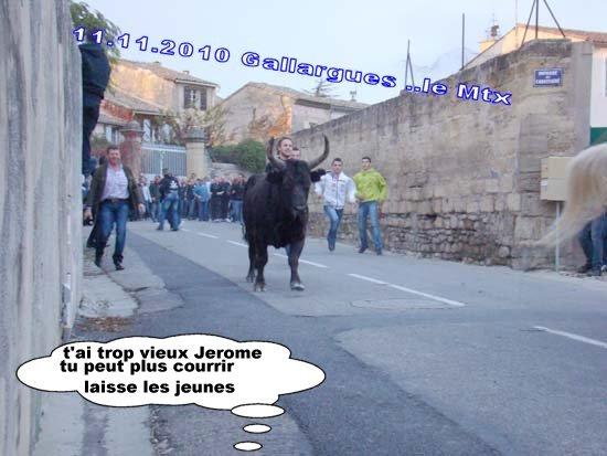 11.11.2010...Gallargues   le Mtx Dsc07213