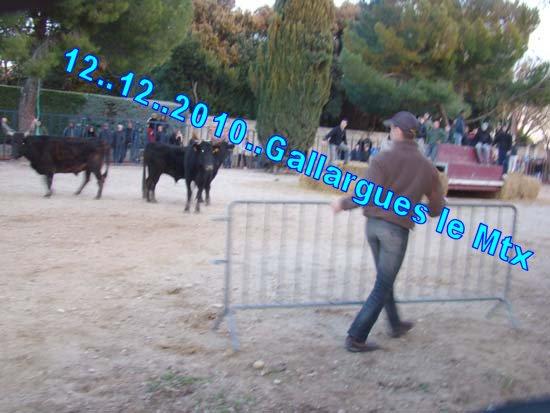 05...12...2010.. Gallarues le Mtx Dsc07610