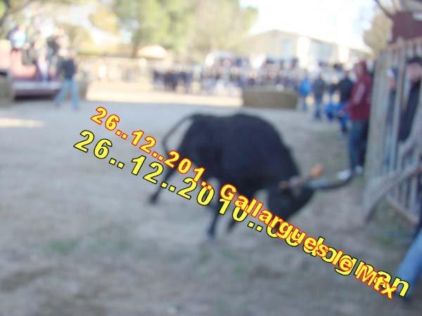 05...12...2010.. Gallarues le Mtx Dsc07810