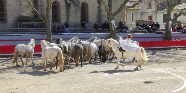 Samedi 27 Mars Marsillargues - 10 Ans de la manade Renaud Vinuesa Cimg4012