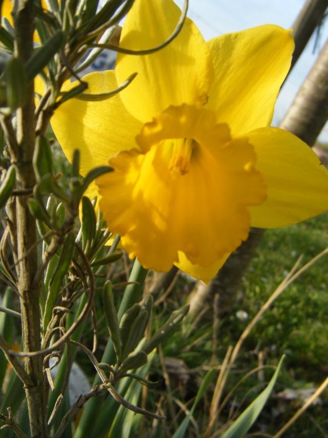 Photo des fleurs de tigrette Dscf8010