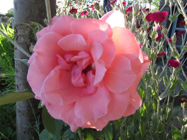 Photo des fleurs de tigrette Img_0112