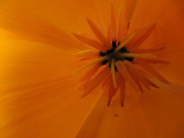Photo des fleurs de tigrette Img_0611