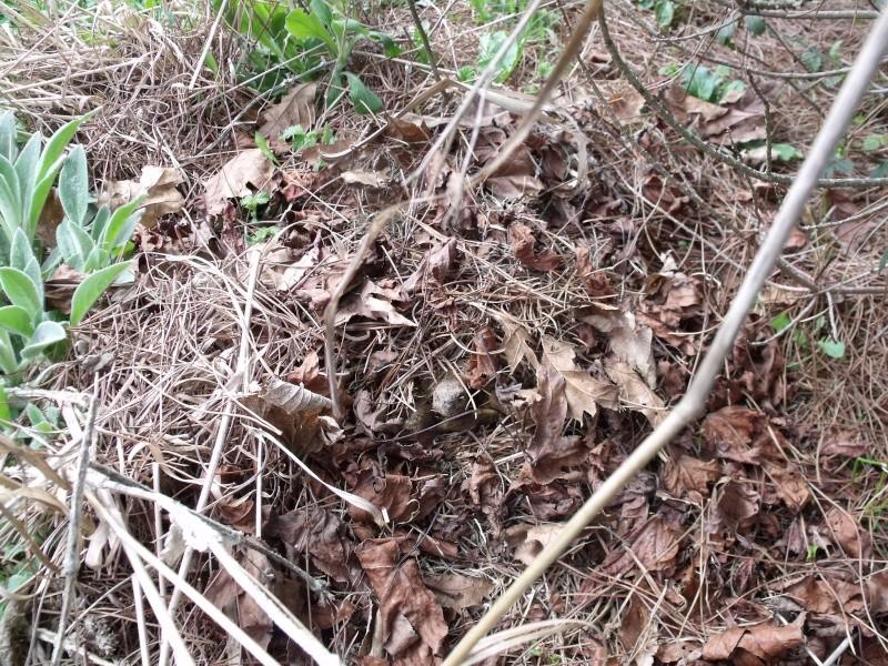 Sortie d'hibernation- - - enfin presque Dscf1314
