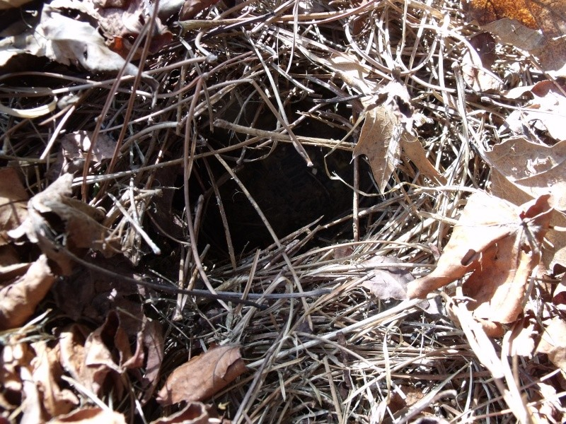 Sortie d'hibernation- - - enfin presque Dscf1316