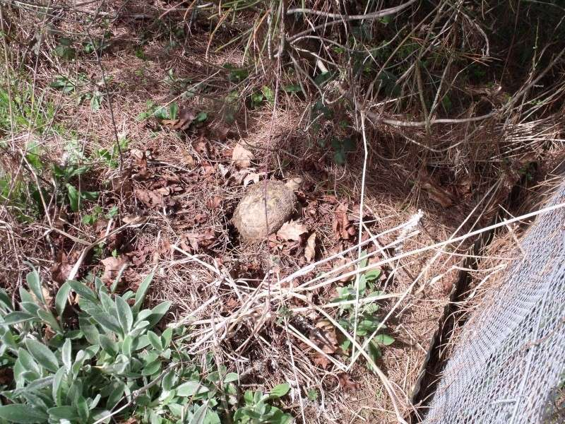 Sortie d'hibernation- - - enfin presque Dscf1321
