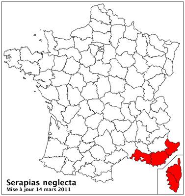Serapias neglecta ( Sérapias méconnu ) Carto_21