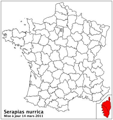 Serapias nurrica ( Sérapias de Nurra ) Carto_22