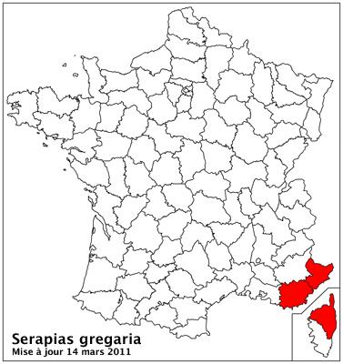 Serapias gregaria/strictiflora ( Sérapias à fleurs raides ) Carto_27