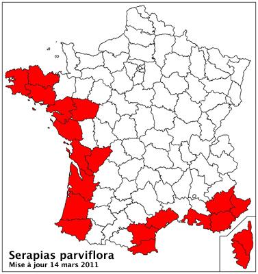 Serapias parviflora ( Sérapias à petites fleurs) Carto_29