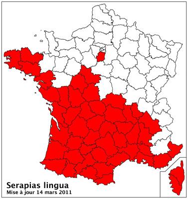 Serapias lingua ( Sérapias en langue ) Carto_32