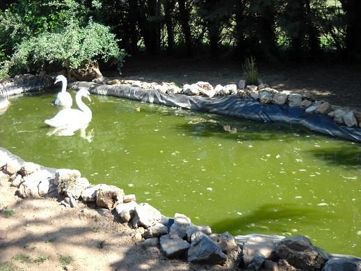étang Dscn0413