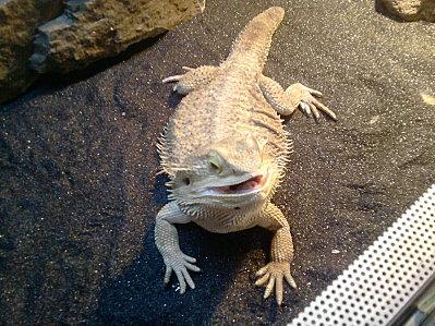 Mes Petits reptiles... 00310