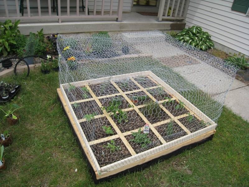 1st year - SF kitchen herb garden (West MI) 5/2010 Copy_c10