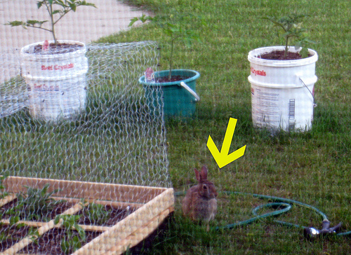 Glad for a wire cover! Rabbit10