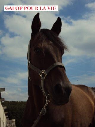 GUAYAQUIL - né en 1994 - adopté en avril 2010 par Amandine Gayaq10