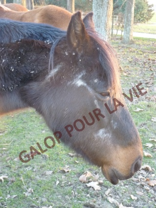 Têtu  du Placineau - placé hors association P1010719