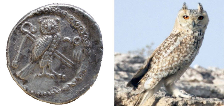 Didrachme ou shekel reduit de Tyr Owllll10