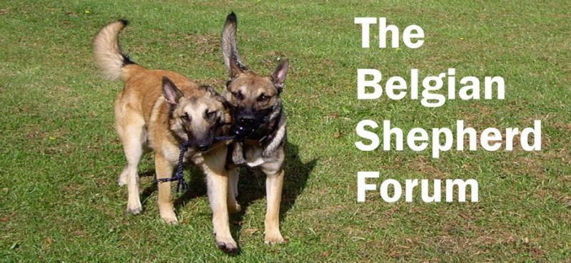 The Belgian Shepherd Forum