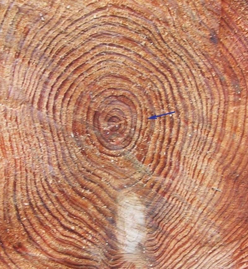 Que pensez-vous de ces bois pour sculpter ? - Page 2 Dscn8012