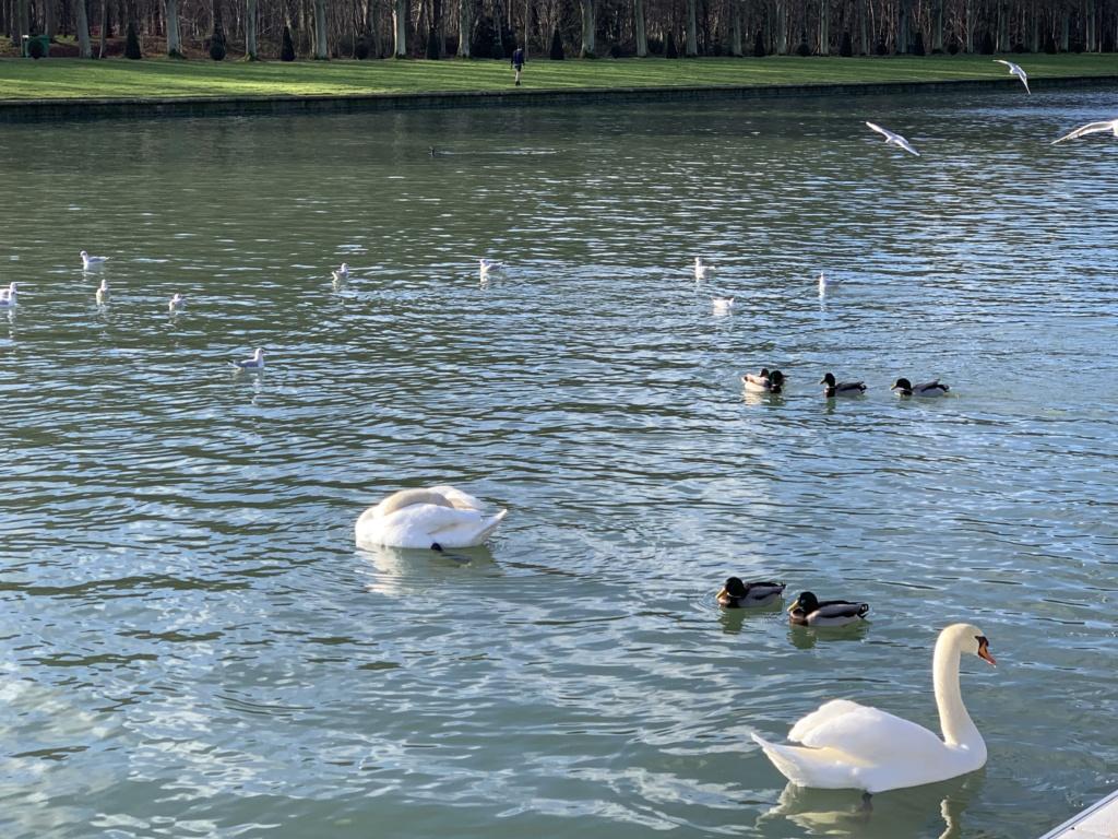 Balade à Versailles et Trianon au temps du Covid  20aafb10