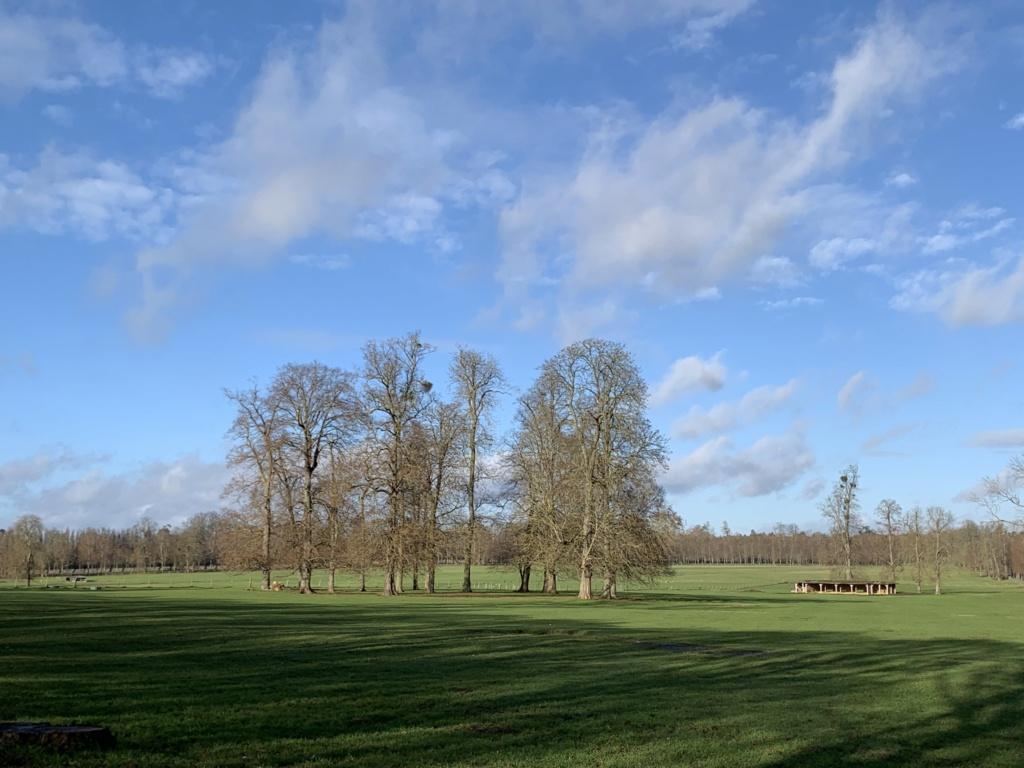 Balade à Versailles et Trianon au temps du Covid  25238d10
