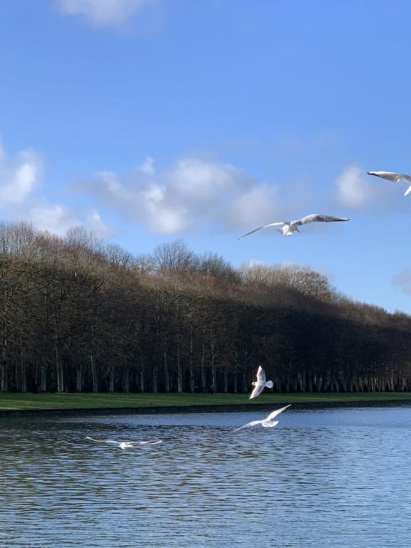 Balade à Versailles et Trianon au temps du Covid  5a07c110