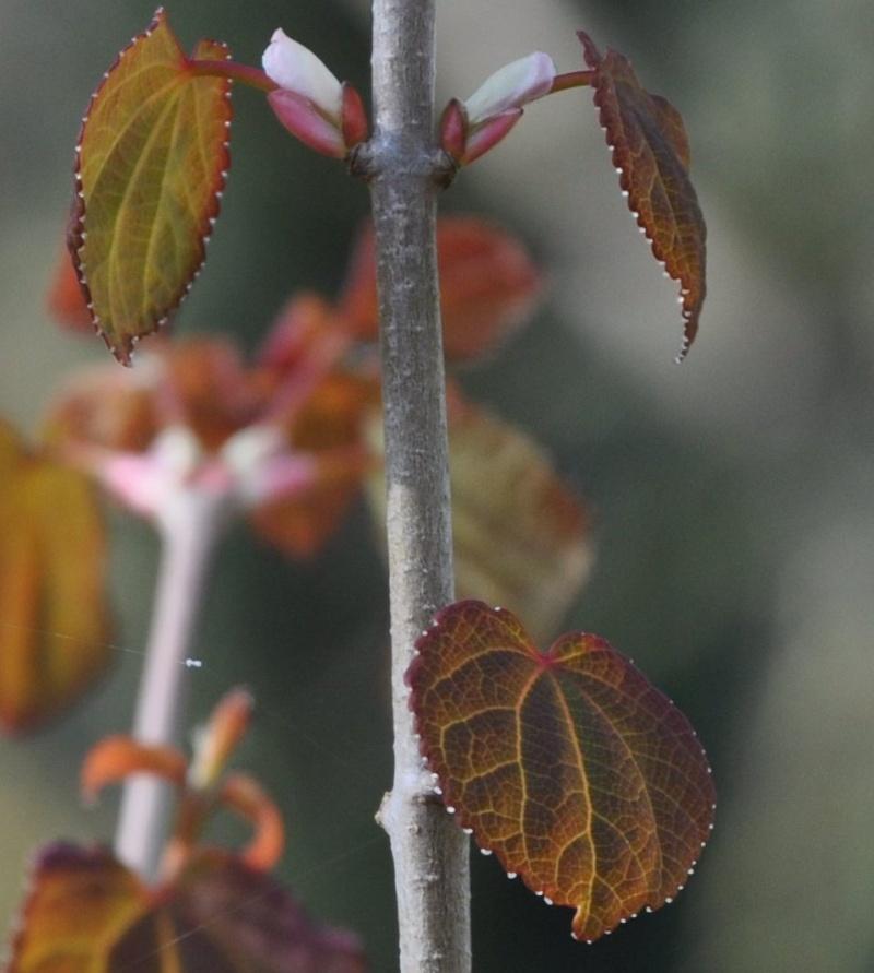 """Qui connaît """"l'arbre caramel"""" ? Fin_ma13"""