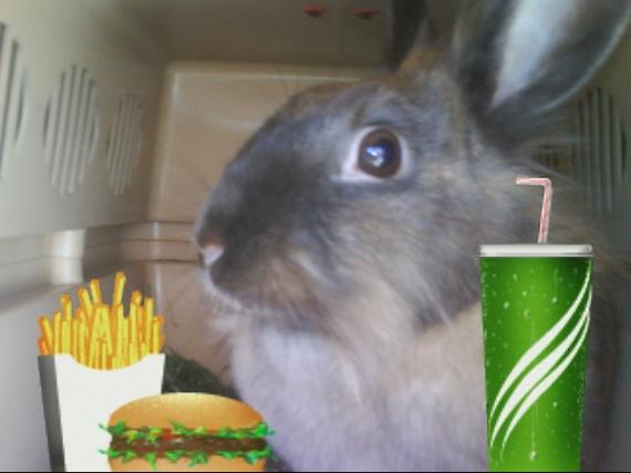 Que mangent vos lapins aujourd'hui ? Miam-m10