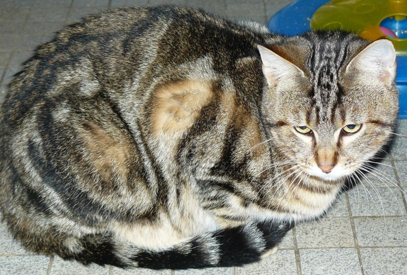 frezbee grand chaton P1120010