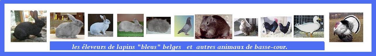 les amis des lapins bleus belges et animaux de basse-cour