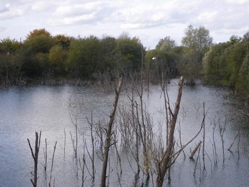 l'étang de Fresville Imgp1312