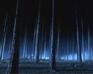 The Forbidden Forest Forbid10